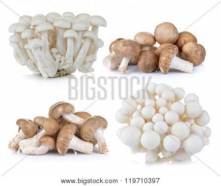 Shiitake Mushroom And White Beech Mushrooms On White Background