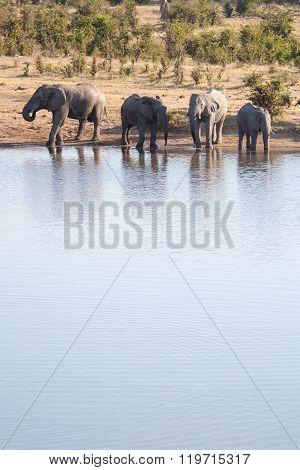 Elephant herd beside a water hole in Zimbabwe.