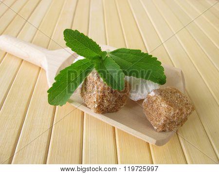 Stevia and sugar cubes