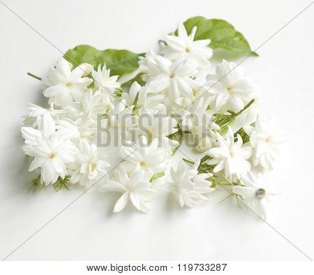 Jasmine Flowers Fresh