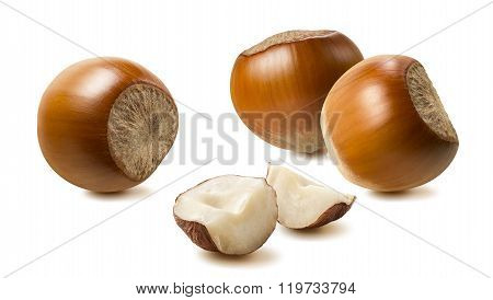 Hazelnut Group Pieces Isolated On White Background