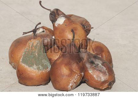 Rotten and moldy pears