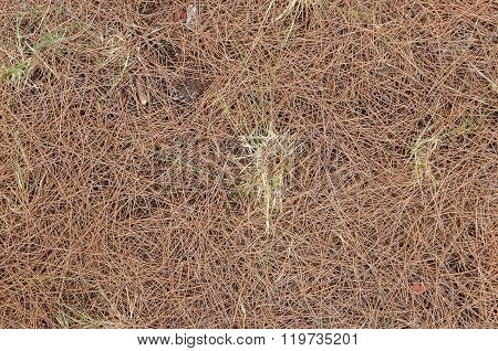 Natural Undergrowth Background Texture