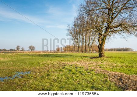 High Bare Trees On The Floodplain Of A River