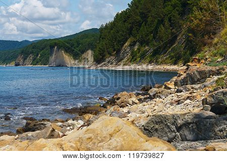Summer rocky sea shore with forest