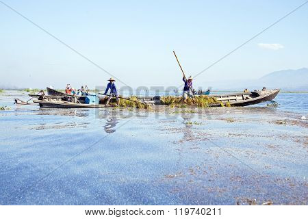 INLE LAKE, MYANMAR - NOVEMBER 23, 2015: Local workers collecting weed from the fresh water on Inle Lake, Myanmar on the 23th November, 2015.