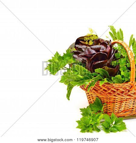 Heap Of Fresh Curly Lettuce, Water-cress, Spinach With Parsley In Basket.