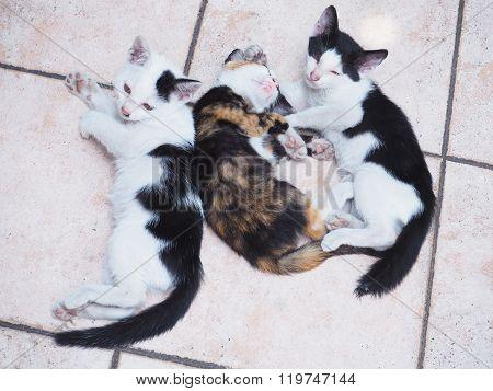 Stray Kittens Sleep
