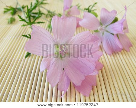 Bouquet with common mallow flowers