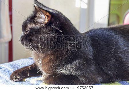 Black cat basking in the sun.