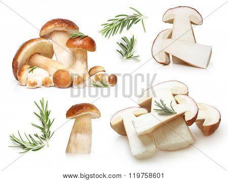 Boletus Edulis mushrooms and rosemary twig isolated on white background.
