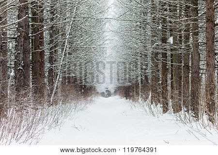Snowfall On The Background