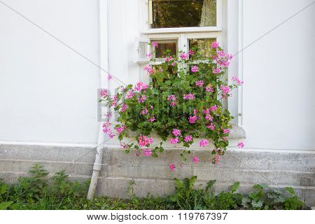 Old house window with flowers.