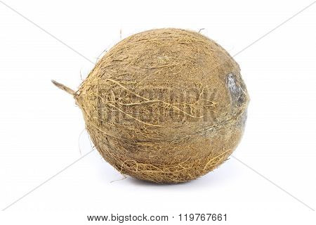 Coconut closeup isolated on a white background