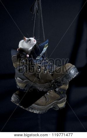 Rat In A Boot.