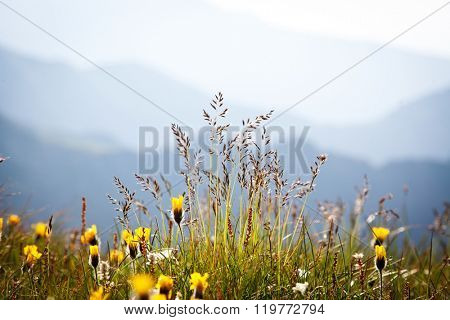 wild flowers with rocky mountains in background