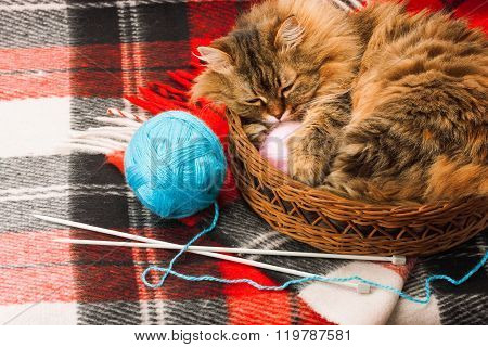 blanket, balls and cat