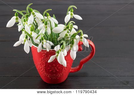 Fresh Snowdrops Bouquet On Dark Background
