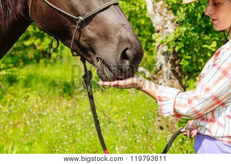 Young Woman Girl Feeding Horse.