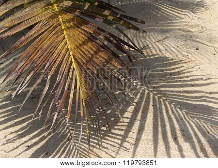 Palm frond and shadows on a beach