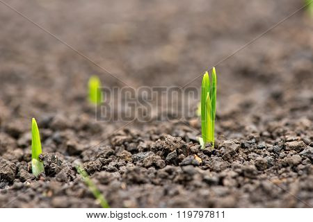 Germinated Plants In The Spring Garden