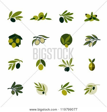 Olive Branch. Set Of Vector Design elements And Icons