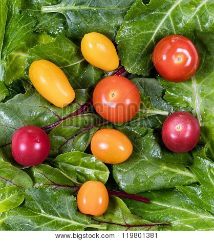 Fresh Green Leaf Salad And Tomatoes In Filled Frame Layout