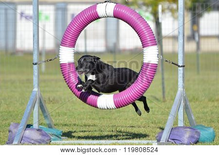 Black Mixed-breed Dog At Agility Trial
