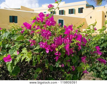 Flowering Bush In Front Of Ft. Christiansted