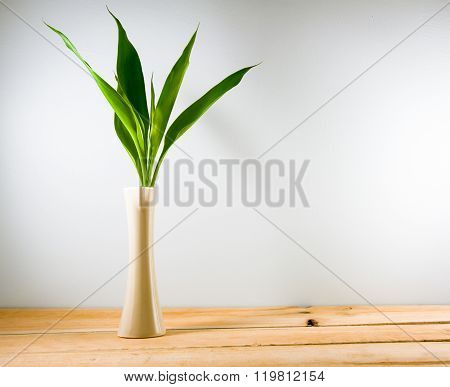Lucky Bamboo (dracaena Sanderiana) In A Crean Vase On Wood Backgrond. Copy Space For Text