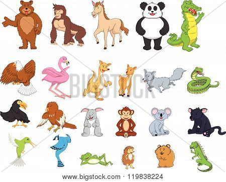 Jungle animal cartoon illustration design