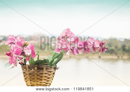 Pink Orchid Flower Blooming Beside The River Scenery