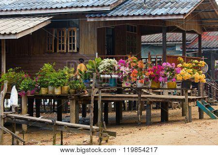 Colorful bougainvillea flowers in flowerpots on home terrace in Ko Mook island, Thailand