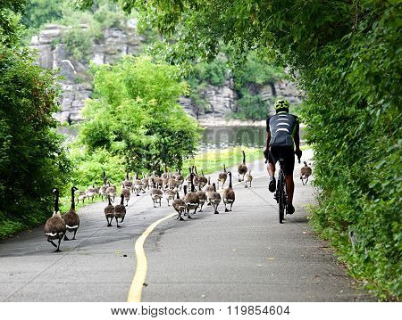 Cyclist in Helmet and sport costume riding in the park. Sport Lifestyle Concept. Cyclist and ducks o