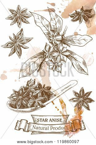 star anise sketches