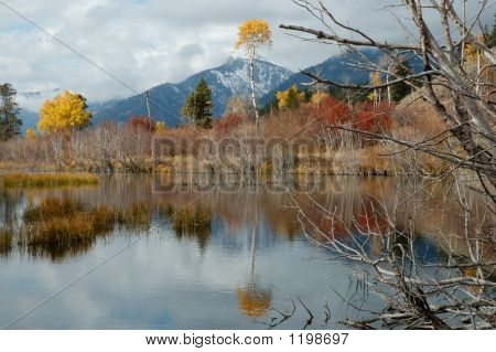 Tetoncolorreflection