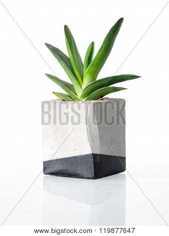 Plant in a concrete painted cubic pot