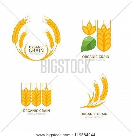 Concept For Organic Products, Harvest And Farming, Grain, Bakery, Healthy Food.