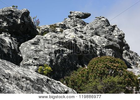 Fynbos in rocks