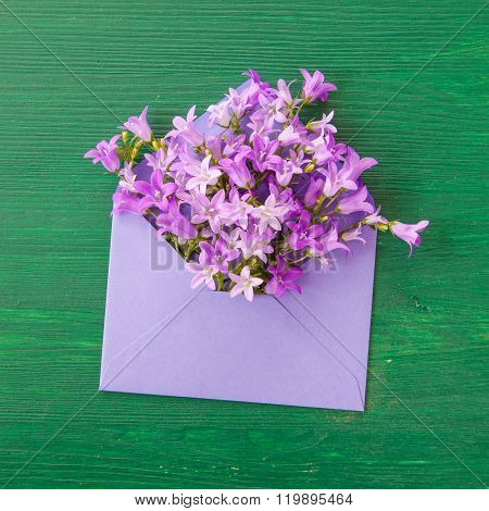 Purple Bellflowers With Envelope