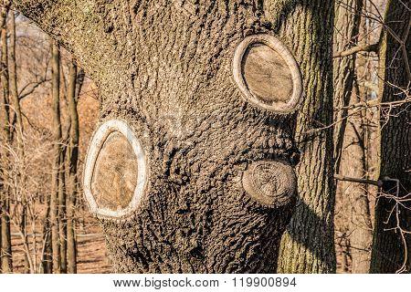 Tree Scars