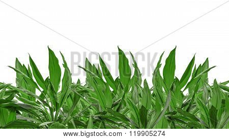 Isolated Green Plants Background