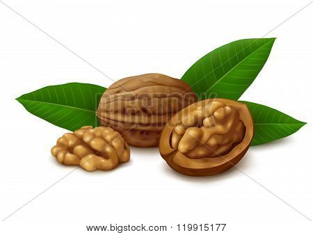 Dried walnuts with leaves on white background