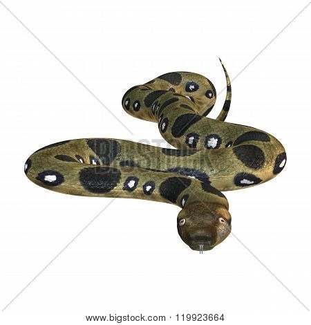 Green Anaconda On White