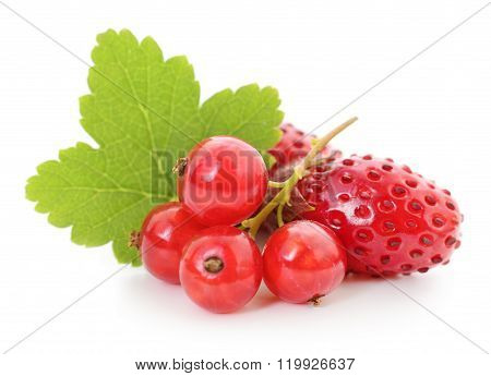 Strawberries And Red Currants