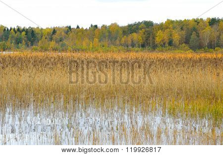 Kavgolovskie Lake And Autumn Forest.