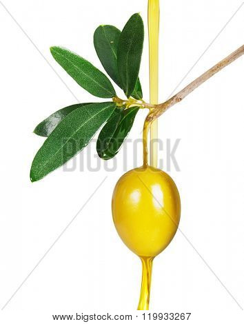 Branch with green olives.Olive oil. isolated on a white background