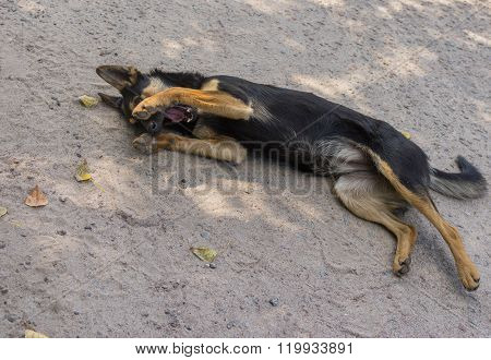 Young black stray dog lie on a street surface