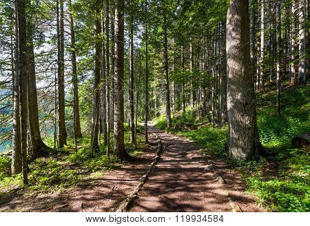 Hiking path in the beautiful forest of Black Lake