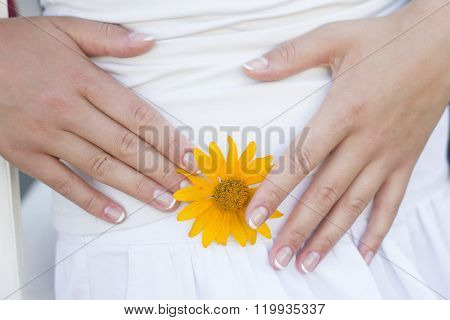 Beautiful female fingers hold a flower. Gentle french manicure and yellow flower.